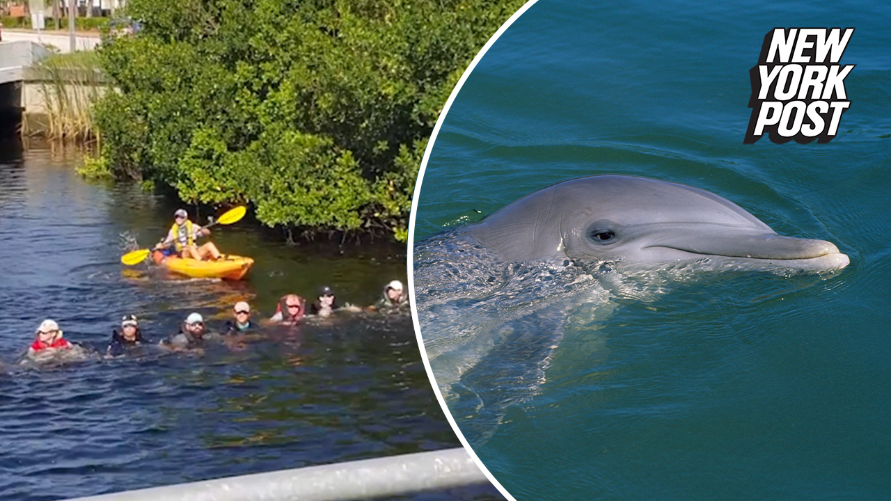 Good Samaritans form human chain to save trapped dolphins