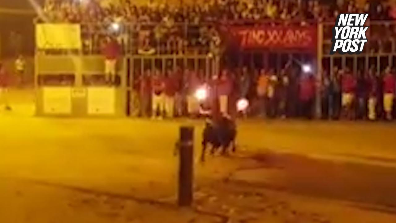 Bull commits suicide after men light its horns on fire