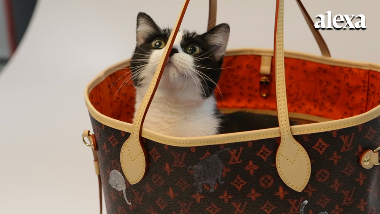 f81e3a613e4a Meet the adorable kittens modeling Louis Vuitton s new  Catogram  collection