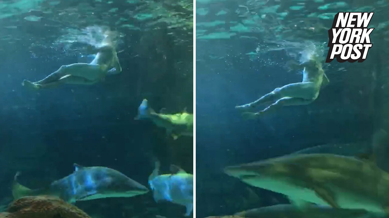 Guy caps off epic bender by skinny-dipping in shark tank