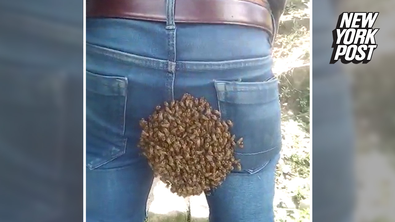 Beehive on the behind: Clingy bees swarm man's butt
