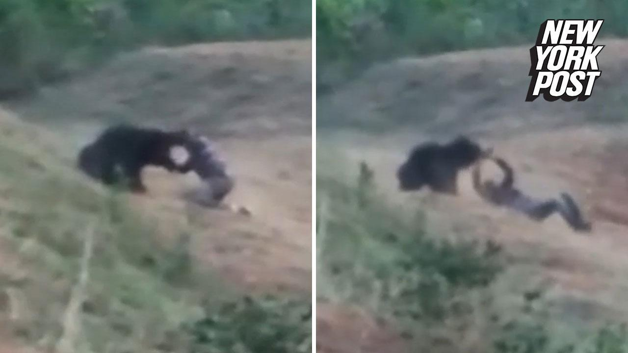 Animal Instincts Watch Online man mauled to deathbear while taking selfie with it