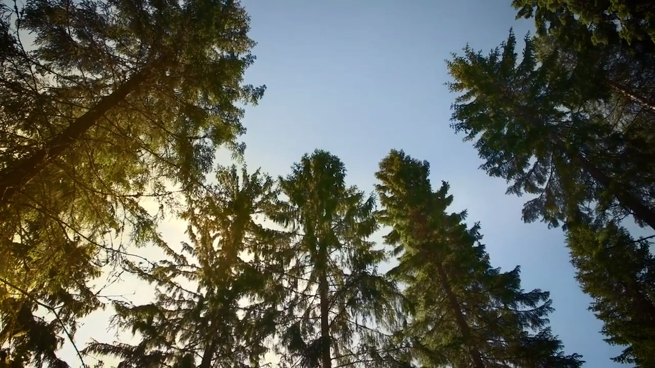 Finland Leads the Way with Climate-Friendly Wood Innovations