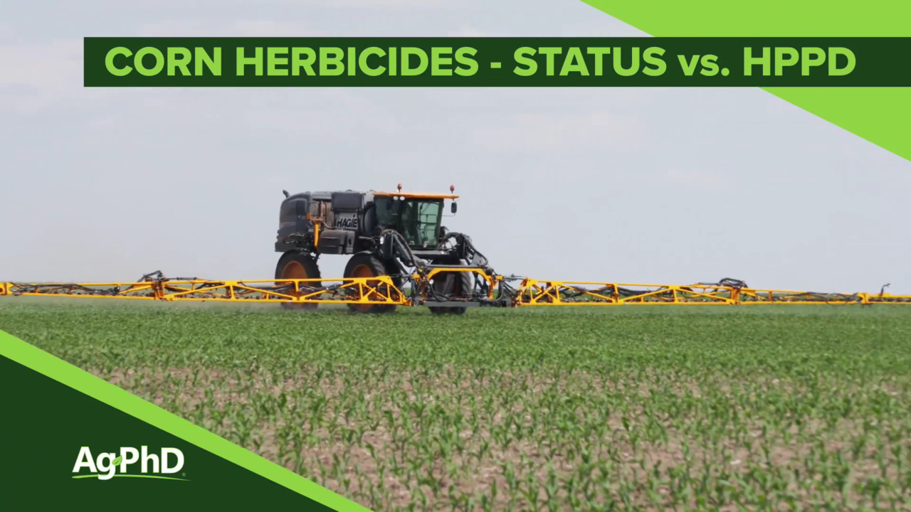 Status vs  HPPD Herbicides (From Ag PhD Show #1100 - Air Date 5-5-19)