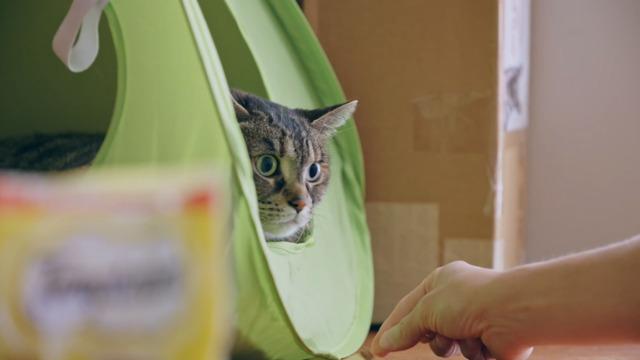 Les soins pour le chat adulte