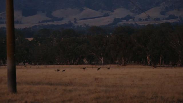 L'importance des animaux indigènes d'Australie