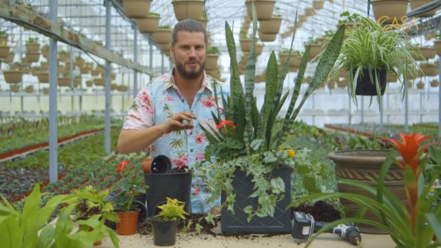 Création de plantes indestructibles