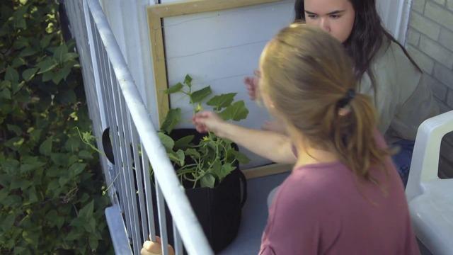 Épisode 03 - Jardiner sur son balcon