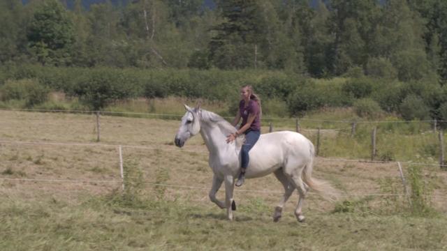 Les chevaux du Domaine Avalon