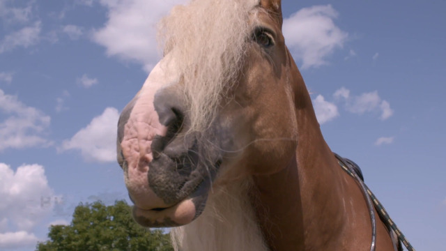Bilbo, le cheval