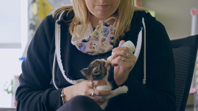 Quoi faire quand on adopte un chaton
