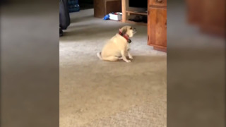 Dog caught spinning 'right round' to the music