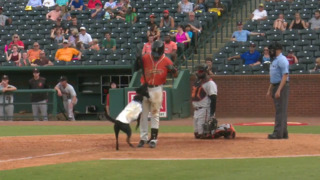 Adorable team dog tries to fetch player's bat... before his at-bat is over
