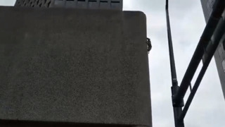 Daredevil raccoon scales Minnesota skyscraper