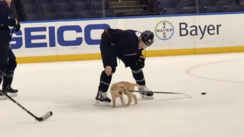 St. Louis Blues' adopted puppy hits the ice to practice with team