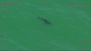 12-foot great white shark spotted near Pacifica Municipal Pier