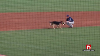 This dog just wants to play fetch, delays minor league baseball game