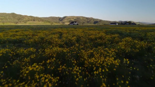 Fly over incredible display of Bear Valley wildflowers in Colusa County
