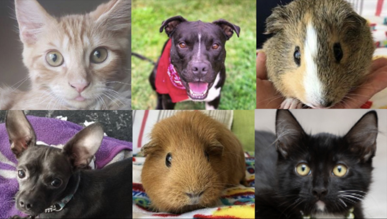 Clear the shelters! These pets are all available for adoption in Sacramento