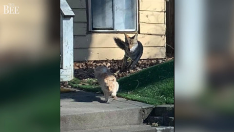 People keep finding mutilated cats in Sacramento. What's likely to blame for the killings