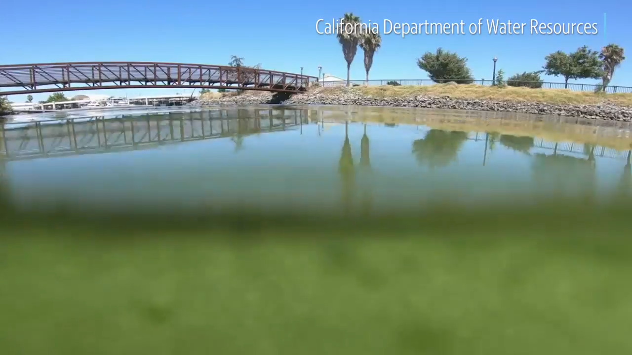 Blue-green algae linked to ALS in UM study, but researchers also found promising treatment