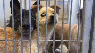 Already-crowded animal shelters overflowing with runaway pets from the 4th of July