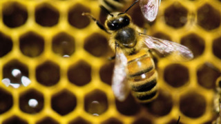 Five easy steps to keep you safe from bees