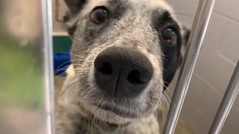 Sacramento SPCA took in these animals from Sonoma County shelter affected by Kincade Fire