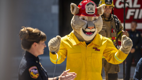 'We could have gone with a bear, but …' Meet Captain Cal, Cal Fire's new mascot
