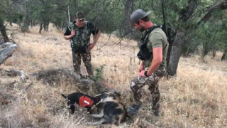 Want wild pig for dinner? Follow a Californian on the hunt
