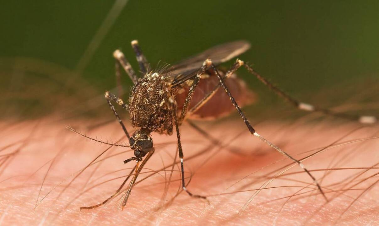 West Nile virus activity reported in Yolo County mosquitoes for first time this year