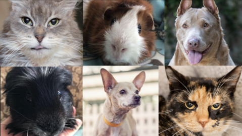 Check out this week's featured adoptable pets