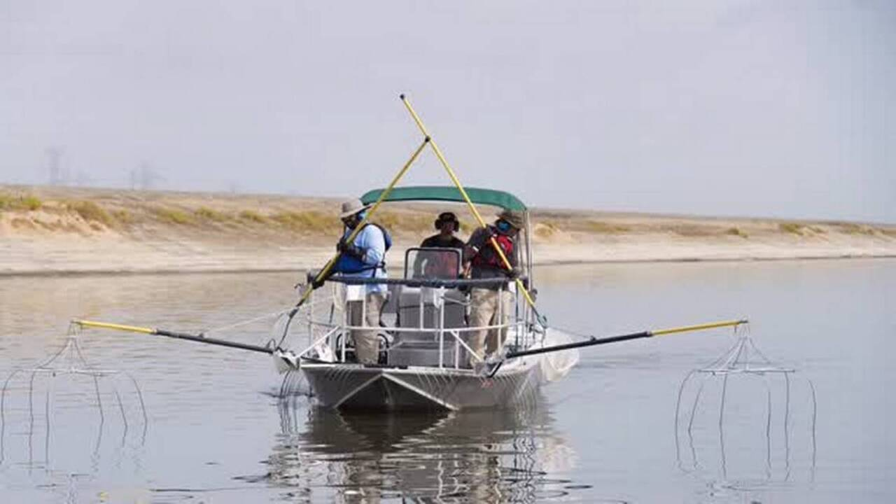 Fishing line striper action takes off near colusa and on for Sac bee fishing line