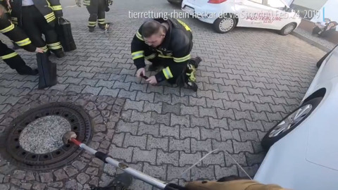 Watch crew rescue a fat rat from manhole cover in Germany