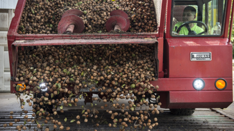 More California fruit and nut growers will get help with Trump tariffs in new farm aid deal
