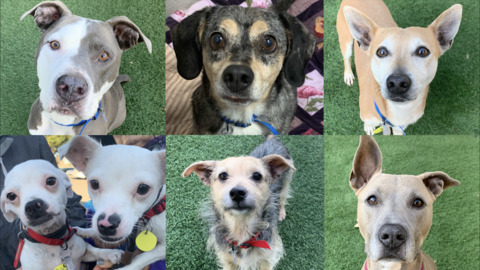 Check out some of the dogs available for free adoption this weekend