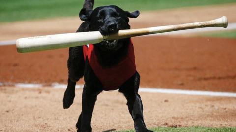 Umpire catches boos for depriving Finn the Bat Dog of his moment of glory at game