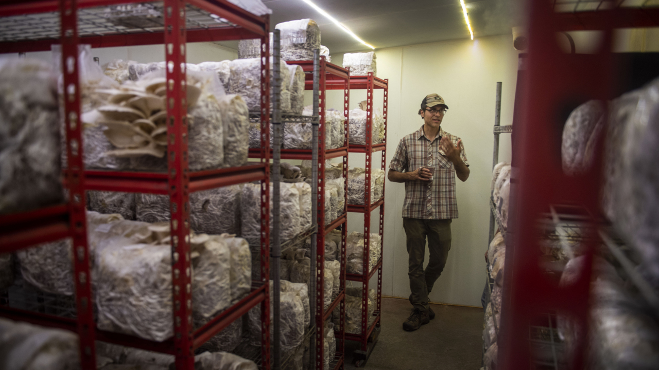 This California business was mushrooming. Then came the insurance crisis