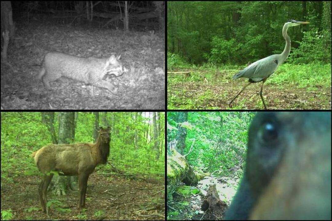 Adorably cute, extremely vicious animal caught by trail camera at North Carolina pond
