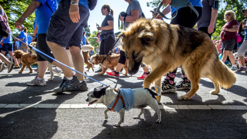 Free spay and neuter programs, low-income vet care may be cut from Sacramento County budget