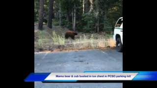 Mother bear and baby bear seen playing in North Lake Tahoe