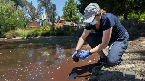 See scientist test red algae or bacteria blooming in Sacramento's McKinley Park pond