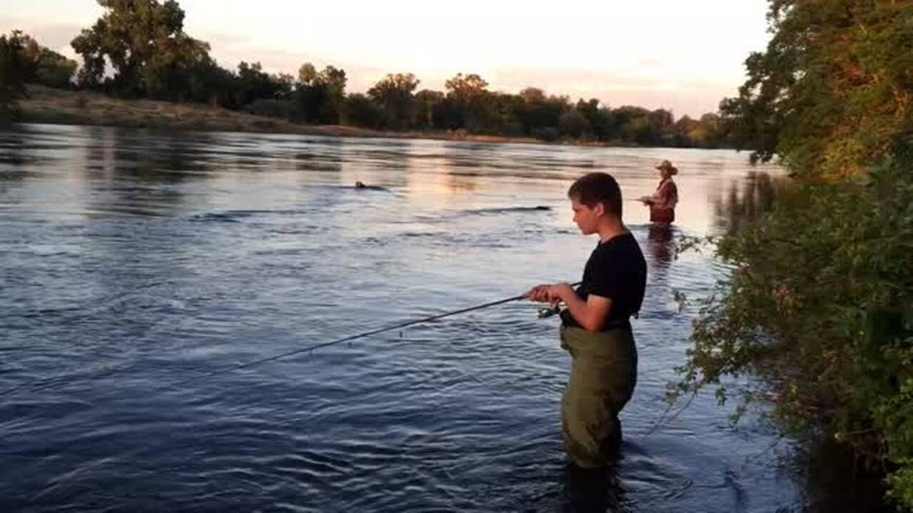 Fishing line: Sacramento River sees plenty of stripers and shad