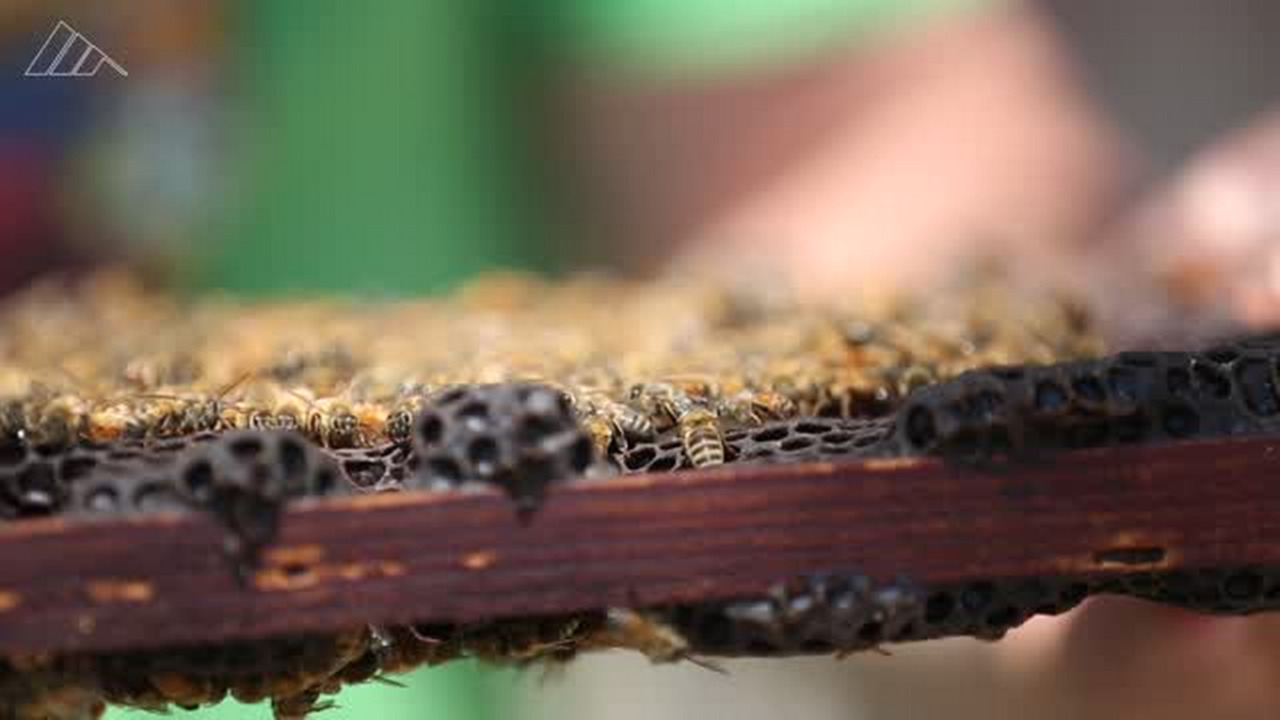 Backyards buzz as beehives catch on in Sacramento, but don't expect easy honey