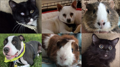 These animals need homes, and they're available for adoption in Sacramento