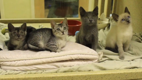 These are the cute pets up for free adoption as animal shelter hits crisis level