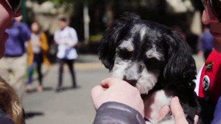 Watch how these adorable puppies ease Sac State students' stress during finals week