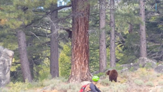 Bear, cub roam awfully close to cyclists on this South Lake Tahoe bike trail