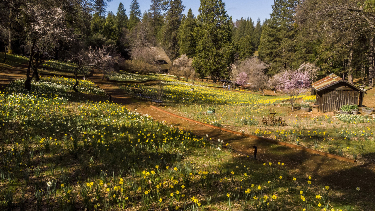 Daffodil Hill to shut indefinitely as crowds create safety hazards, owners say