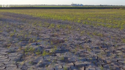 Drone video over dry Sacramento Valley rice fields